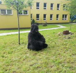 My a gorila