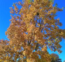 podzim a babí léto