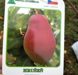 sázení ovocné zahrady